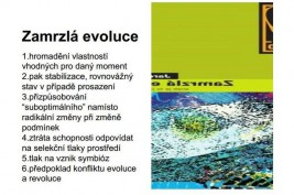 Zandlvize26